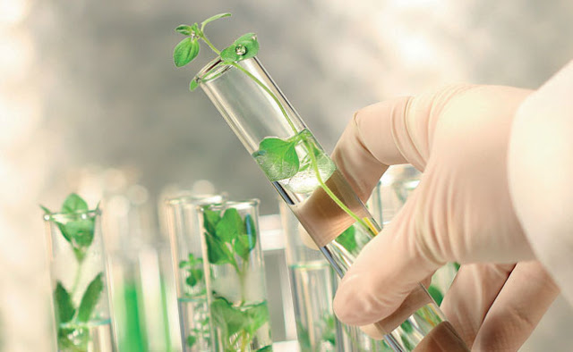 Green chemistry: a 21st century revolution in science