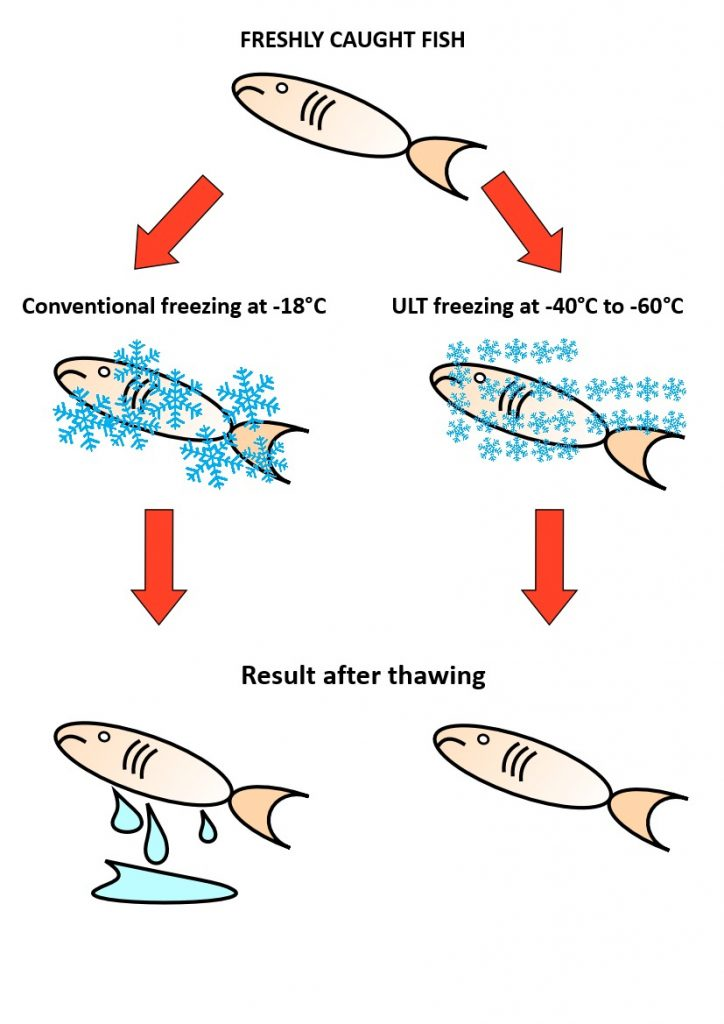 ULT freezer for fish vs conventional freezing